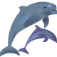 Dolphins Vector Clipart