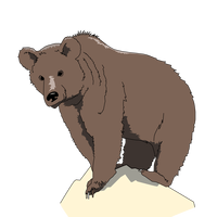 Grizzly Bear standing on rock vector clipart