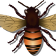 Honey Bee Vector Clipart