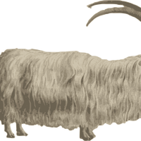 Mountain Goat Vector Clipart