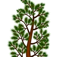 Pine Branch Vector Clipart