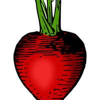 Red Radish Vector Clipart