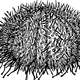 Sea Urchin Drawing Vector Clipart