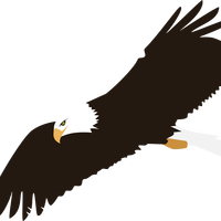 Soaring Bald Eagle Vector Clipart