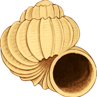 Twisting Conch shell Vector Clipart