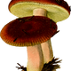Two Mushrooms vector clipart