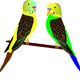 Two Parakeets Vector Clipart