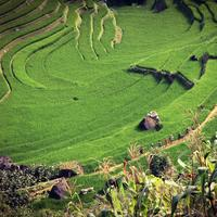 Terrace and farms in Vietnam