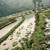Rice fields and steppes in Vietnam